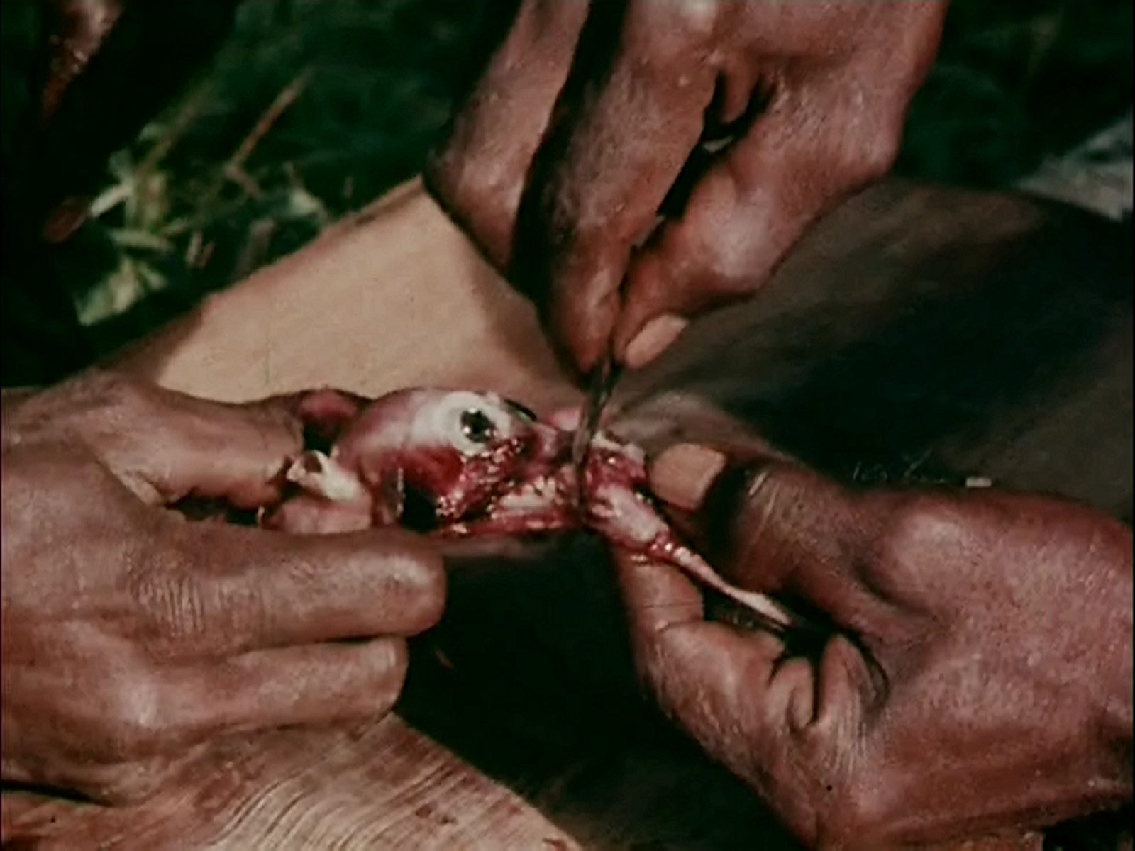 http://sinsofcinema.com/Images/Real%20Cannibal%20Holocaust/Real%20Cannibal%20Holocaust%20DVD%20One7%20Movies.jpg